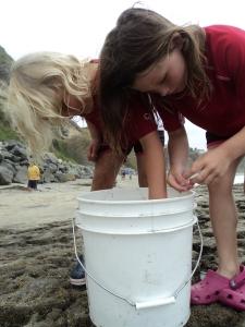 Bucket habitat...