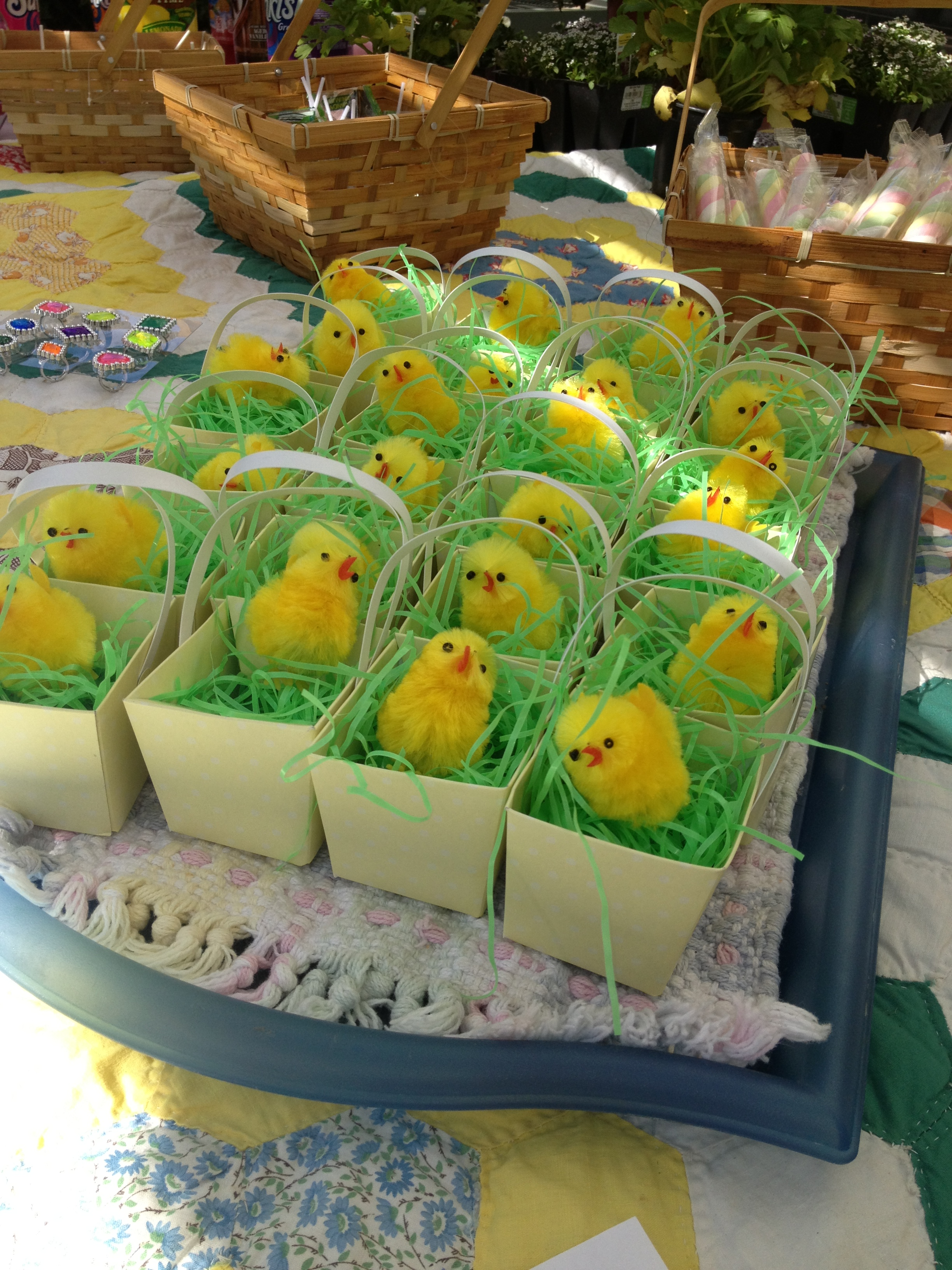 Chicks in the grass! these little cuties nested in Easter grass and dollar tree boxes...