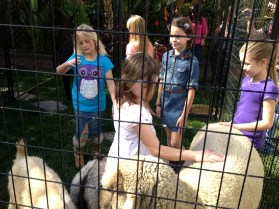 Kids loved the petting zoo