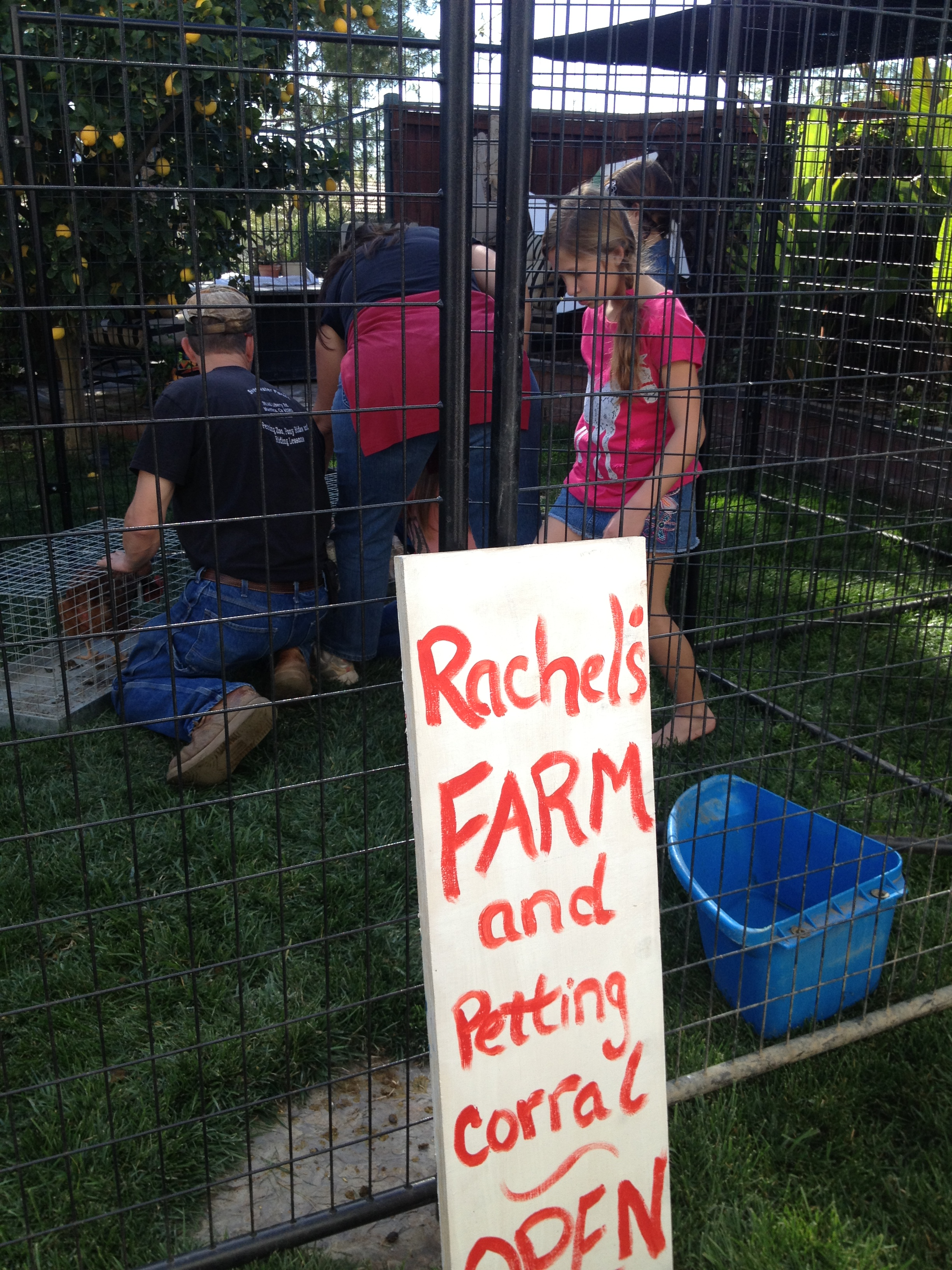 Ray's farm and petting zoo open for business!